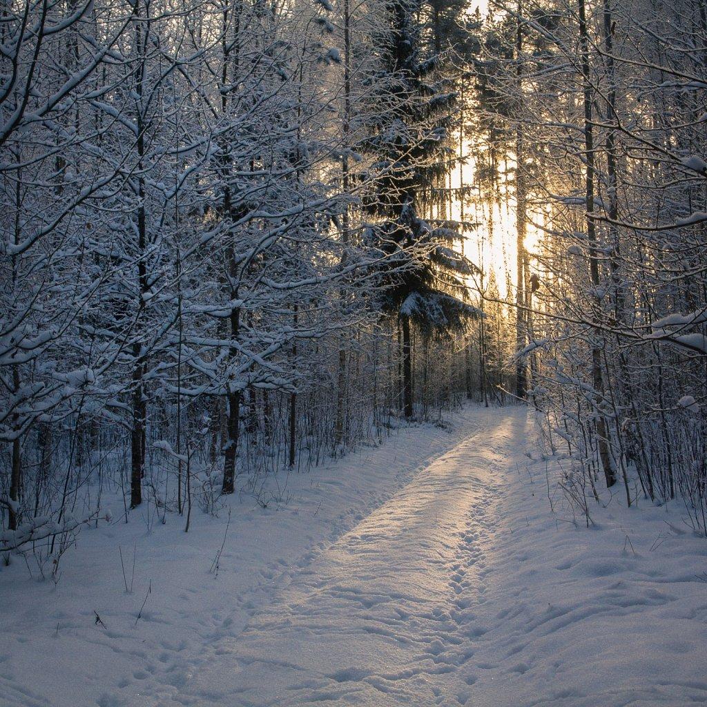 Talve hommik